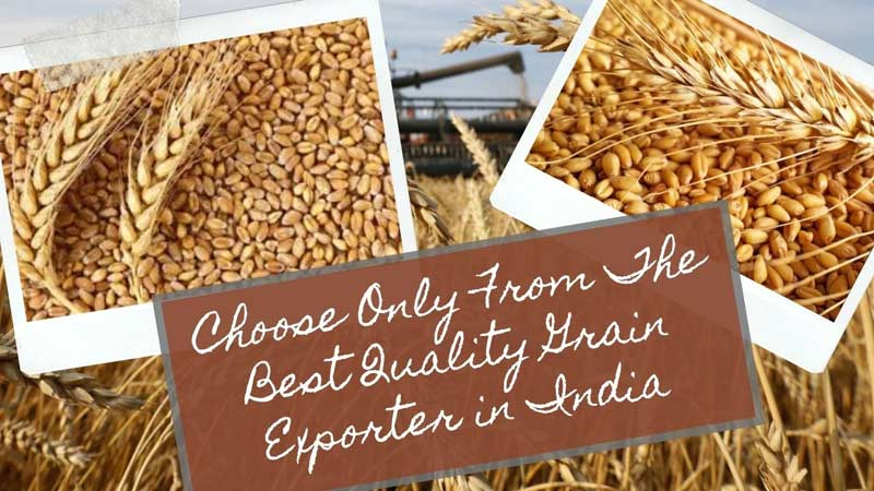 Choose Only From The Best Quality Grain Exporter in India